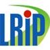 Local Roads Improvement Programme (LRIP)